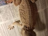 Available for adoption from Arrowhead Reptile Rescue