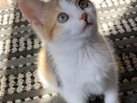 Lavender is a beautiful little Calico kitty.  She is