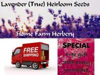 Lavender (True) Heirloom Seeds, Order now FREE shipping