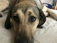 Layla-ADOPTION PENDING's story This beauty is Layla.
