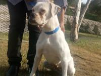Layla was found wondering the streets in Tijuana,