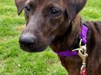 Are you looking for a sweet and loving dog? Layla is