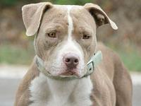Layla's story This beauty is still up for adoption.