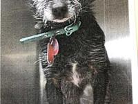 Layla's story PAW Animal Shelter is a high intake No