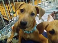 My story Leah is a 4 month cur mix. She likes dogs and