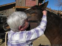 LEARN HOW YOU CAN IMPROVE YOUR HORSE'S HEALTH AND