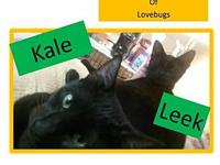 Leek's story You can fill out an adoption application