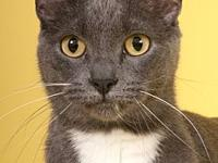 Leela's story Leela is a friendly, gentle, playful and