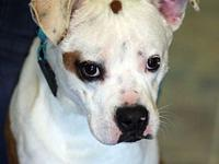 LEFTY's story MEET LEFTY! An adorable, 1-2 year old,