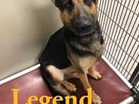 My story Legend is a 4-5 yr old GSD. He likes to give