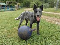 Leia's story Leia has been dewormed, microchipped,