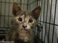 Leia's story Hi everyone, my name is Leia! I am a sweet