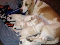 I have four pups that will be 8 weeks old at the