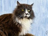 Lena's story Lena is a 5-year-old Domestic Longhair