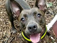Lennie's story Lennie is as sweet as they come. She's