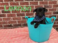 Lennon's story Lennon is a male lab/collie mix and is
