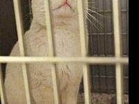 Lennox's story This boy is looking for his forever home