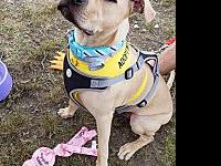 Lenny's story Lenny is a very special boy, looking for