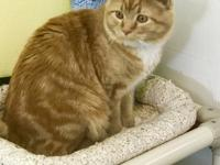 Lenny is a very handsome male cat born 03/2017 and came