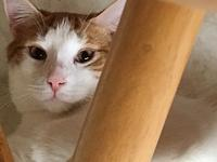 Lenny's story All of our cats and kittens are spayed or