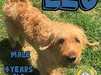Leo's story You can fill out an adoption application