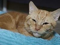 LEO's story Meow! I''m so glad you''re thinking about
