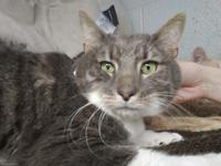 Leo is a newbie to the shelter and very frightened in