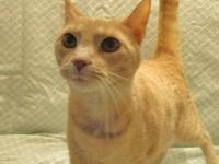 Leo's story 18-c06-021 Leo Breed: DSH Mix Size: medium
