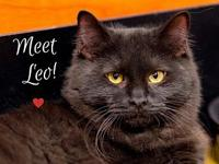 Leo's story Leo is a sweet shy boy. He has really