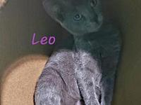 Leo's story Thank you for checking out our wonderful