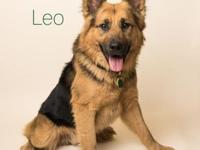 Leo's story Hello beautiful world! My name is Leo and