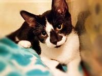 Leo *kitten*'s story You can fill out an adoption