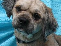 Leo Lhasa's story I Need a Particular Home. Leo Lhasa
