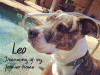Leo is ready for spring and a family to call his own.