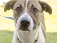 Visit Leon at our Adoption Center open Monday through