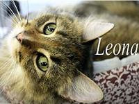 Leona's story The adoption fee is $85.00 with an