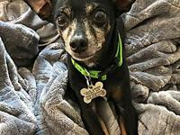 Leonardo's story FOSTERED IN: Chicago, IL 60647 AGE: