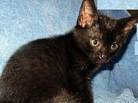 Leonie's story Description: super cute black kitten