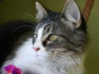 Leroy's story Meet Leroy! I am one friendly guy that