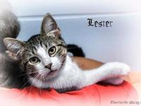 Lester's story All of our pets are spay/neut, up to