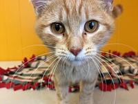 Lettie's story Lettie is a rare female polydactyl
