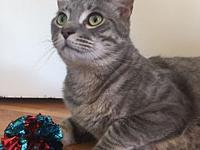 Levi (DECLAW)'s story Levi is a loving 4 year old male