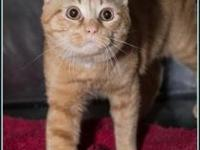 LEVI's story $97.50 FEE INCLUDES: neutering/spaying,