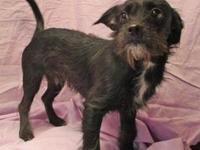 Levi's story 19-D03-036 Levi Breed: Terrier Mix Size: