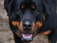 AVAILABLE NOW  Lewie is between 1 and 2 years old.  He