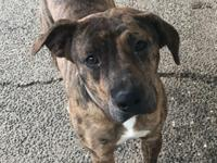 Sweet Lexi is approx 18mo old and weighs about 50lbs.