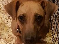 Lexi's story Lexi is a 7 year old Dachshund mix that