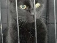 Poor Lexi was found as a stray in the freezing cold in