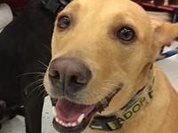 Lexi's story Lexi is a sweet & calm girl who does