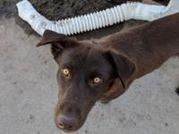 Lexie is a 2 year old mixed breed rescued from a